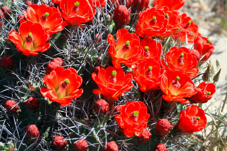 Agua Fria Nursery Cactus Flowers Santa Fe New Mexico